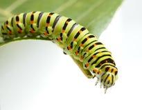Robactwo gąsienica na zielonym liściu zdjęcia royalty free