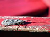 robaki iii jest życie Zdjęcie Royalty Free