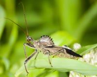 robaki koła Fotografia Royalty Free