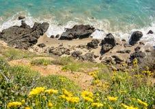 Robben, die entlang PCH ein Sonnenbad nehmen lizenzfreie stockfotos