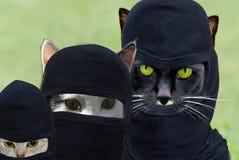 Robber cat family Royalty Free Stock Photo