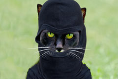 Robber cat Royalty Free Stock Image