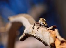 Robber fly on tree branch Stock Photos