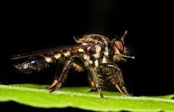 robberfly zielony liść zdjęcia royalty free
