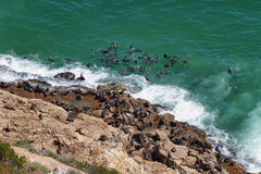 Robberg nature reserve Royalty Free Stock Photos