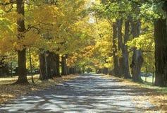 Robbins庄园路秋天视图在Annandale, NY 免版税库存照片