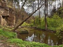 Robersky potoka zatoczka w wiosny Peklo dolinie czeski regionu turystycznego Machuv kraj Zdjęcie Stock