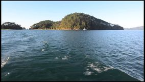 Roberton Island in the Bay of Islands New Zealand stock video footage