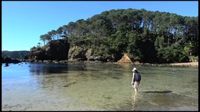 Roberton Island in the Bay of Islands New Zealand stock video