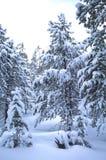robertson wy场面的冬天 免版税库存图片