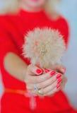 Robiący manikiur dandelion kwiat i paznokcie fotografia royalty free