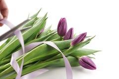 Robić bukietowi od świeżych purpurowych tulipanów z faborkiem Fotografia Royalty Free