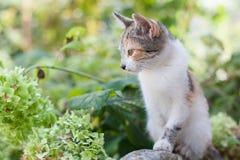 Robić kot w ogródzie w jesieni tle obraz stock