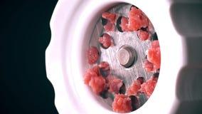 Robić surowemu mincemeat z mięsnym mincer w górę strzału, obraz royalty free