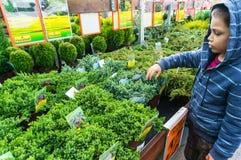 Robić zakupy dom rośliny Obrazy Stock