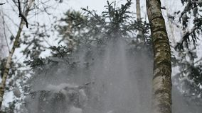 Robi potrząśnięciu śnieżystego drzewa w lesie przy zimą w slowmo zbiory