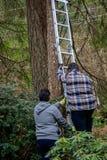 Robić projektowi na drabinie w lesie zdjęcia stock