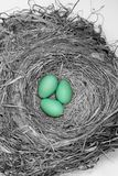 Robiins Nest Royalty Free Stock Images