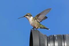 Robijnrood-Throated Kolibrie op een Camera Stock Fotografie