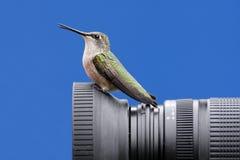 Robijnrood-Throated Kolibrie op een Camera Royalty-vrije Stock Foto