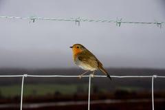 Robin à la réservation d'oiseau de Leighton Moss RSPB Photographie stock