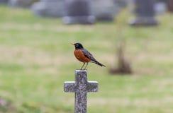 Robin σε έναν σταυρό στοκ εικόνα