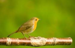 Robin vektor abbildung