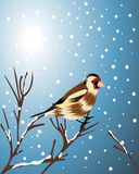 Robin. In a snowing paradise Royalty Free Stock Image