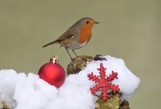 Robin. Stock Image