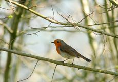 The Robin Stock Images