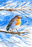 Robin. Cute Robin sitting on a branch of a tree during the cold winter Royalty Free Stock Photos