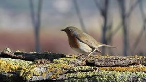 robin stock footage