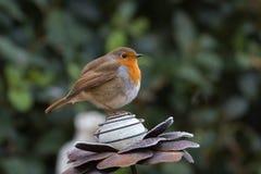 Robin auf Metallblumendekoration mit grünem Hintergrund Lizenzfreies Stockfoto