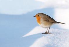 Robin auf Schnee lizenzfreie stockfotos