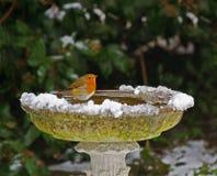Robin auf Vogelbad im Schnee Lizenzfreie Stockfotos