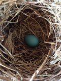 Robin& azul x27; huevo de s fotos de archivo