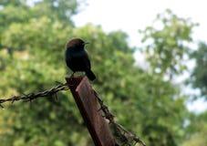 Robin Bird Stockbilder