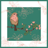 Robin bird on the branch of cherry. Vector illustration. Vector illustration of a robin that sits on a branch of cherry that blooms Stock Photography