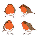 Robin Bird Color Set. Set of different hand drawn color cute robin birds Stock Photo
