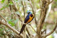 Robin Bird Stock Photos
