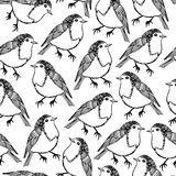 Robin bird pattern Stock Image