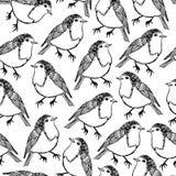 Robin bird pattern Stock Image