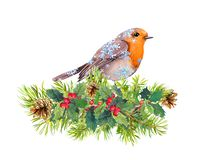 Robin bird in snow flakes. Christmas tree branches, mistletoe. Watercolor vector illustration
