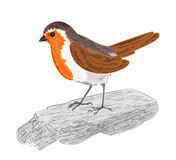 Robin bird on the stone vector. Illustration without gradients royalty free illustration