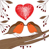 Robin Birds In Love Immagini Stock
