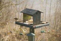Robin On Birdtable. A Robin Feeding On A Birdtable Royalty Free Stock Photos