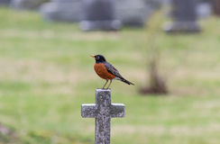 Robin on a Cross Stock Image