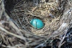 Robin Egg Stock Images
