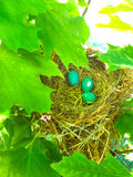 Robin Eggs Stockbild