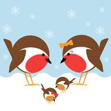 Robin family. A cute family of robin redbreasts in the snow Stock Photography